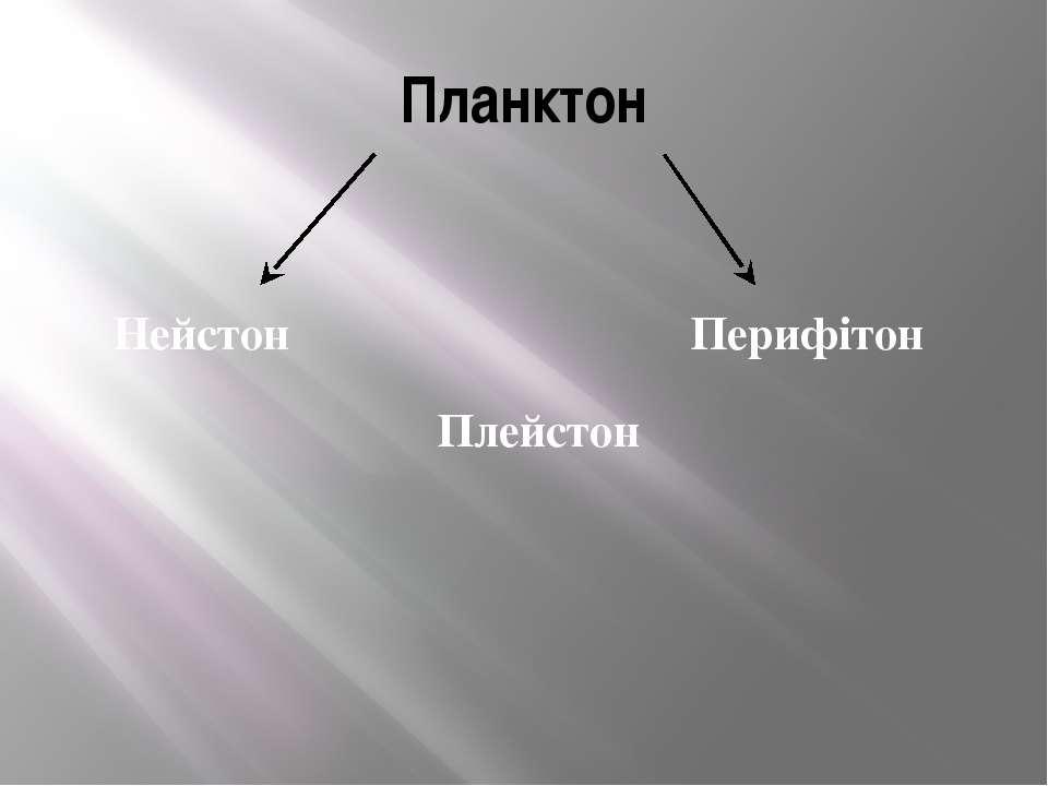 Планктон Нейстон Плейстон Перифітон