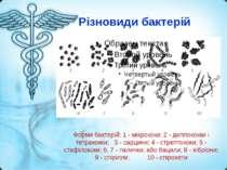 Різновиди бактерій Форми бактерій: 1 - мікрококи; 2 - диплококки і тетракокки...
