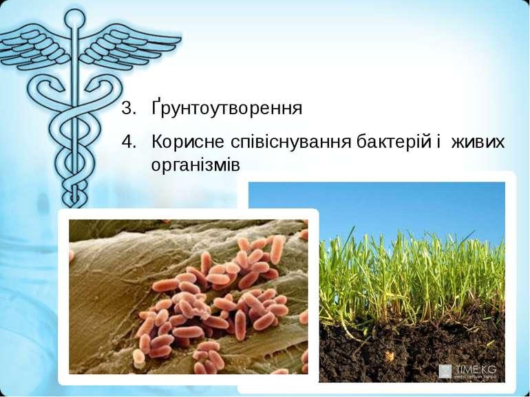 Ґрунтоутворення Корисне співіснування бактерій і живих організмів