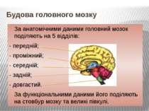 Будова головного мозку За анатомічними даними головний мозок поділяють на 5 в...