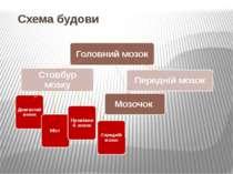 Схема будови