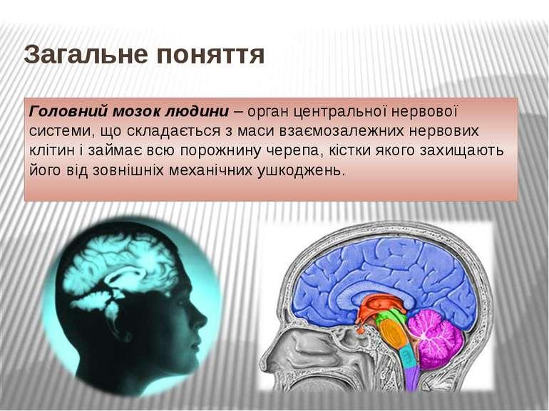 Загальне поняття Головний мозок людини – орган центральної нервової системи, ...