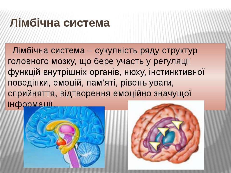 Лімбічна система Лімбічна система – сукупність ряду структур головного мозку,...