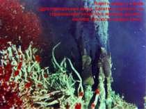 Навіть зараз у таких гідротермальних жерл, багатих хімічною та термальною ене...