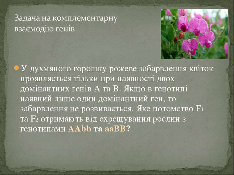У духмяного горошку рожеве забарвлення квіток проявляється тільки при наявнос...