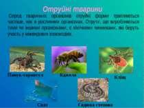 Серед тваринних організмів отруйні форми трапляються частіше, ніж в рослинних...