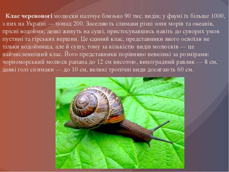 Клас черевоногі молюски налічує близько 90 тис. видів; у фауні їх більше 1000...