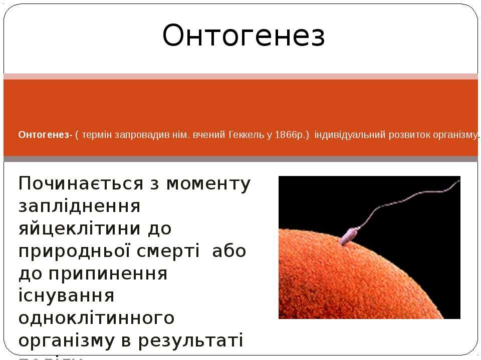 Онтогенез- ( термін запровадив нім. вчений Геккель у 1866р.) індивідуальний р...