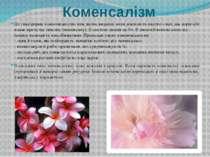 Коменсалізм Це така форма взаємовідносин між двома видами, коли діяльність од...