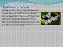 Гриби-агрономи Європейські вчені досліджували симбіотичні відносини між гриба...