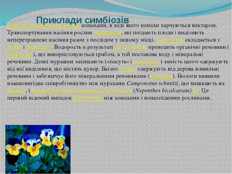 Приклади симбіозів Запилення квіткових рослин комахами, в ході якого комахи х...