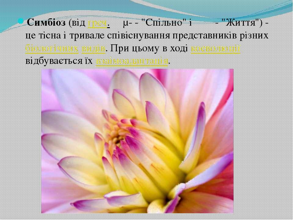 """Симбіоз (від греч. συμ- - """"Спільно"""" і βίος - """"Життя"""") - це тісна і тривале сп..."""