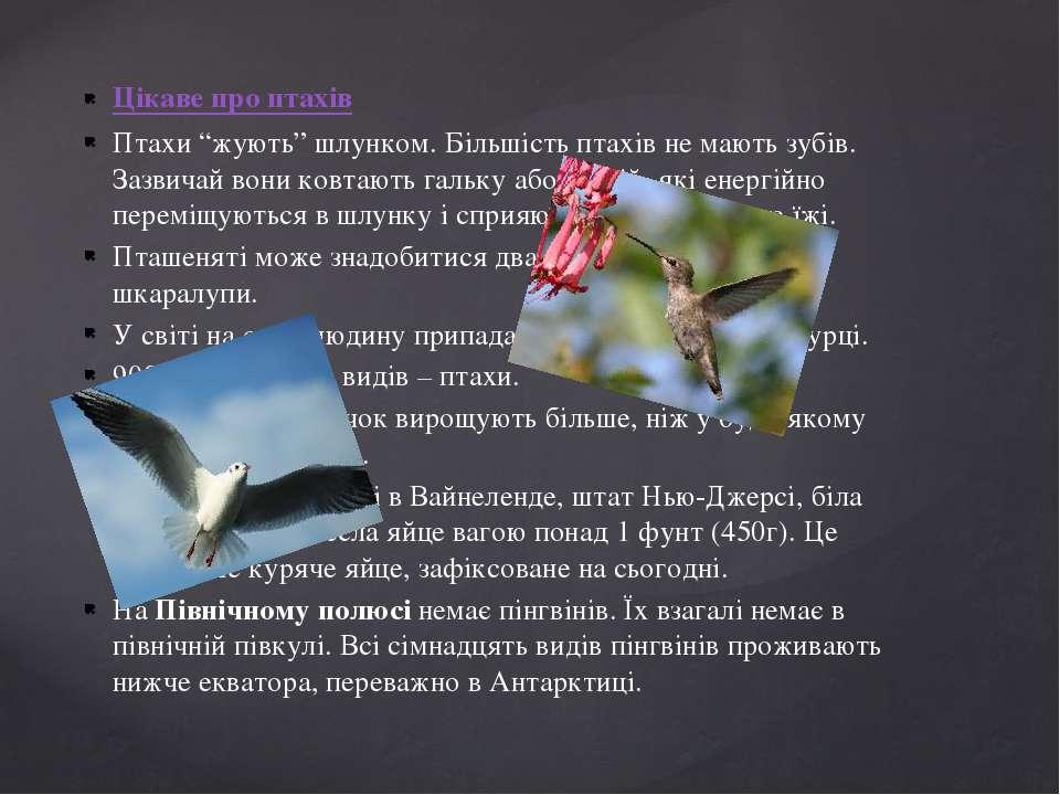 """Цікаве про птахів Птахи """"жують"""" шлунком. Більшість птахів не мають зубів. Заз..."""