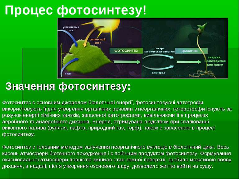 Процес фотосинтезу! Значення фотосинтезу: Фотосинтез є основним джерелом біол...