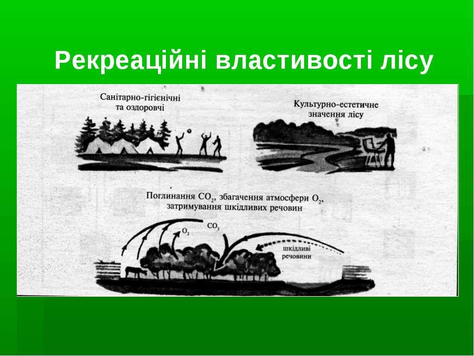 Рекреаційні властивості лісу
