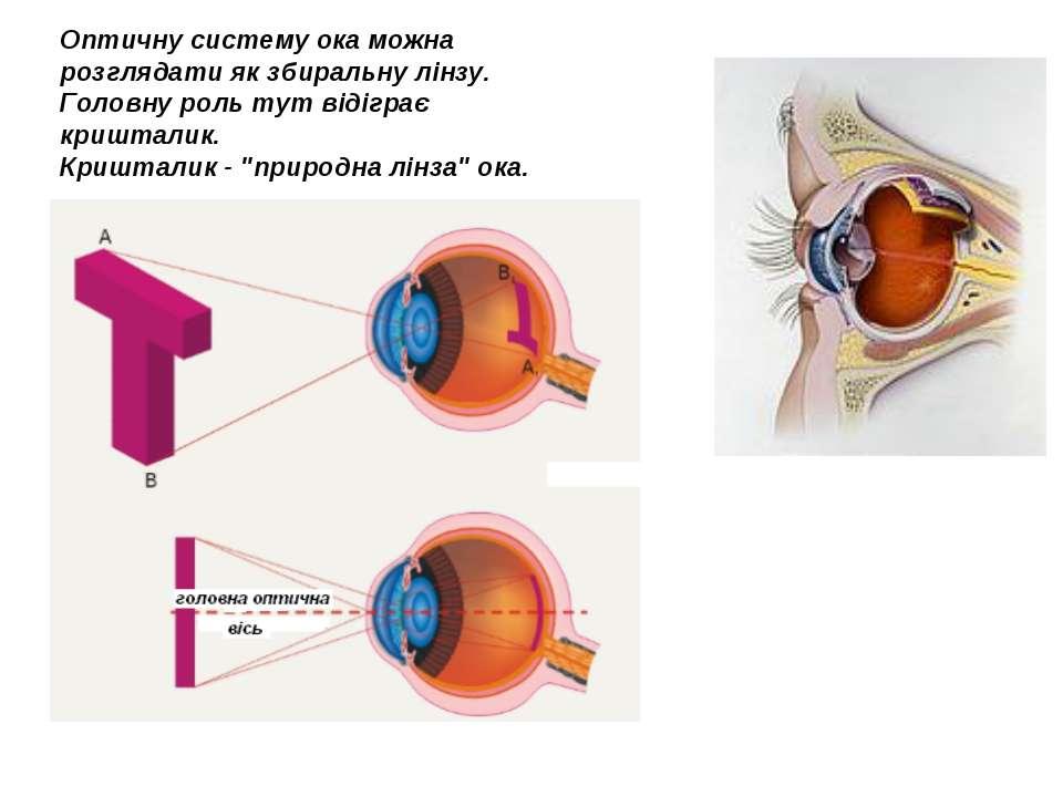 Оптичну систему ока можна розглядати як збиральну лінзу. Головну роль тут від...