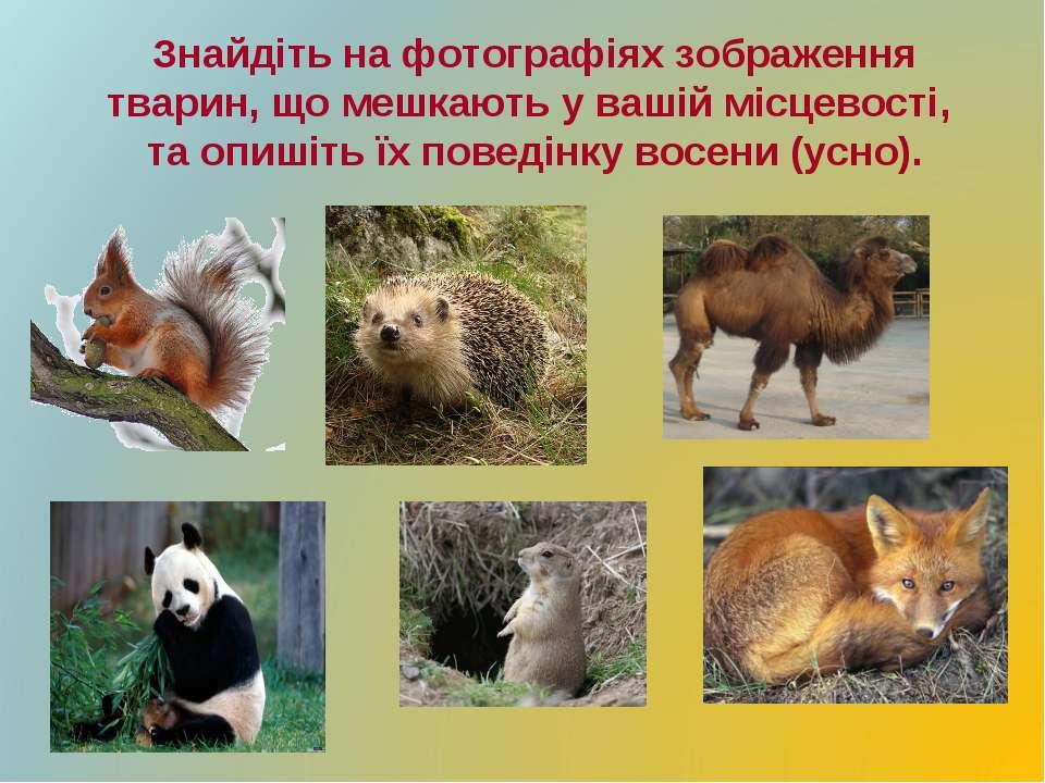 Знайдіть на фотографіях зображення тварин, що мешкають у вашій місцевості, та...