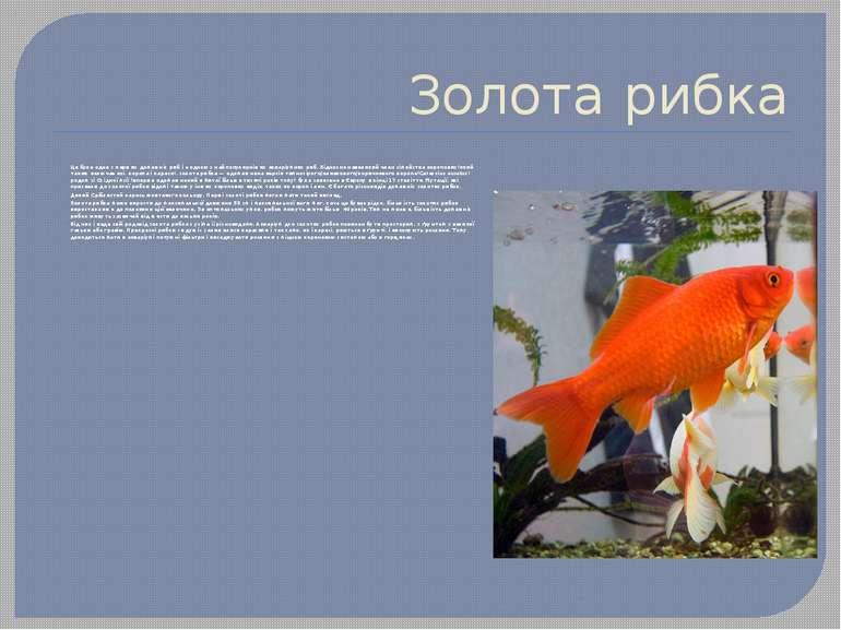 Золота рибка Це була одна з перших домашніх риб і є одною з найпопулярніших а...