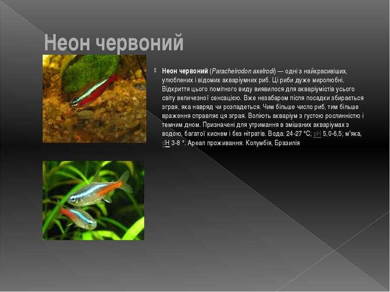Неон червоний Неон червоний (Paracheirodon axelrodi)— одні з найкрасивіших, ...