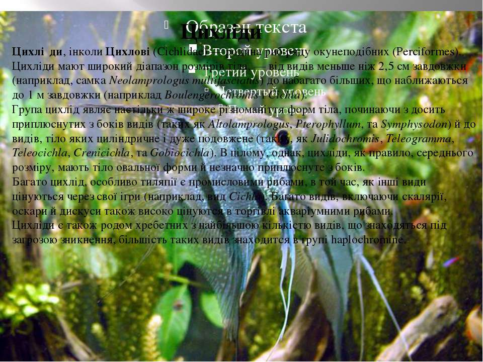 Цихліди Цихліди Цихлі ди, інколи Цихлові (Cichlidae)— родина риб ряду окунеп...