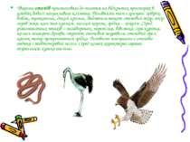 Тварини степів пристосовані до життя на відкритих просторах в умовах доволі п...