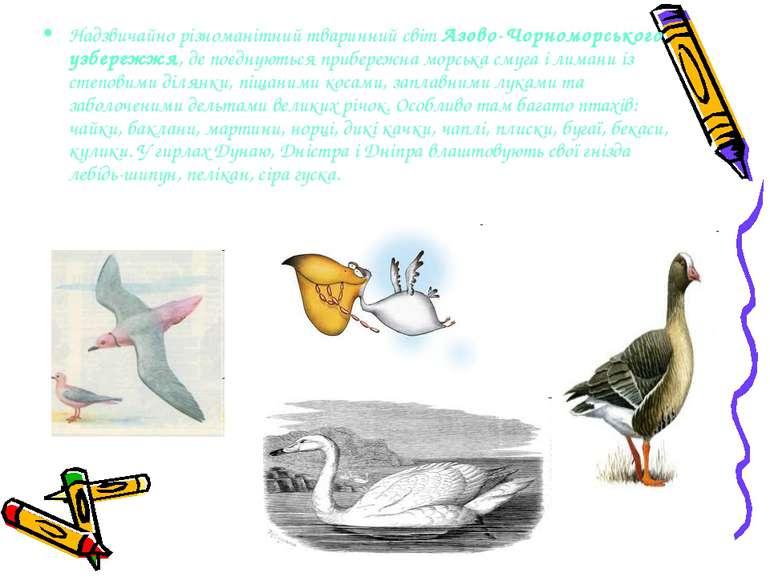 Надзвичайно різноманітний тваринний світ Азово-Чорноморського узбережжя, де п...