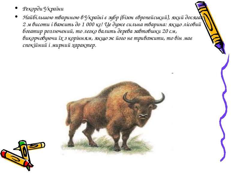 Рекорди України Найбільшою твариною в Україні є зубр (бізон європейський), як...