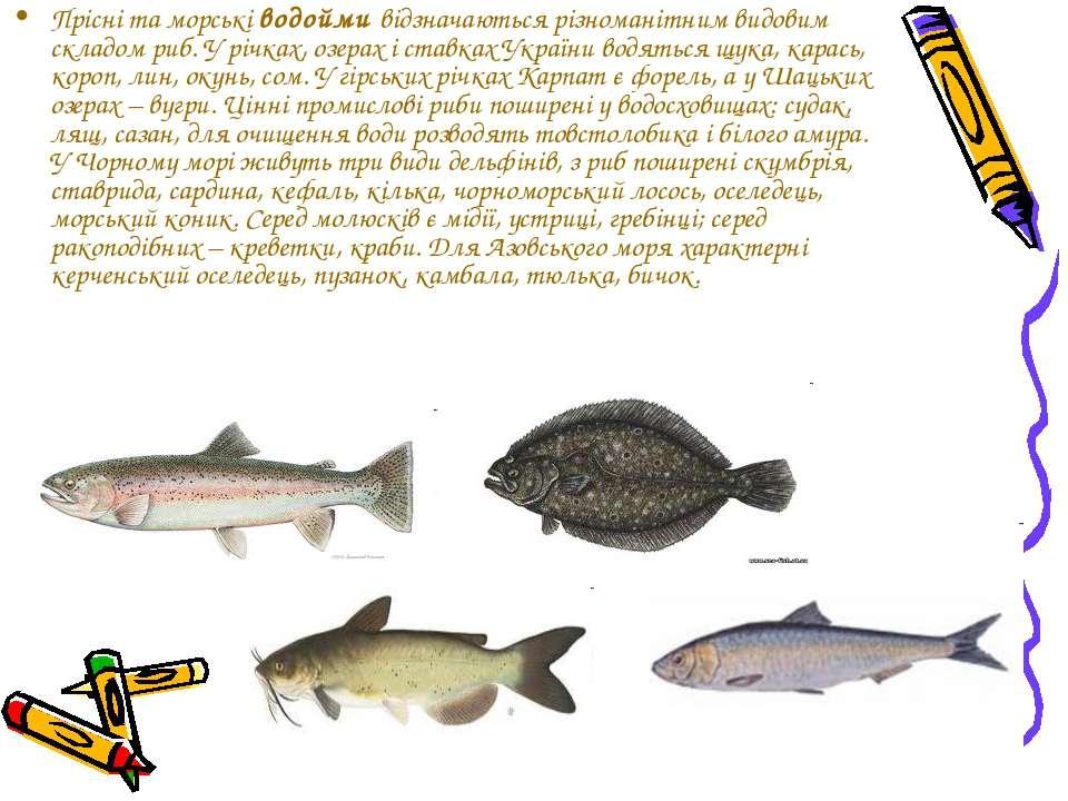 Прісні та морські водойми відзначаються різноманітним видовим складом риб. У ...