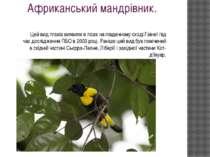 Африканський мандрівник. Цей вид птахів виявили в лісах на південному сході Г...