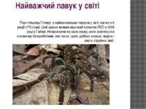 Найважчий павук у світі Паук-птицеед Голіаф, є наймасивнішим павуком у світі,...