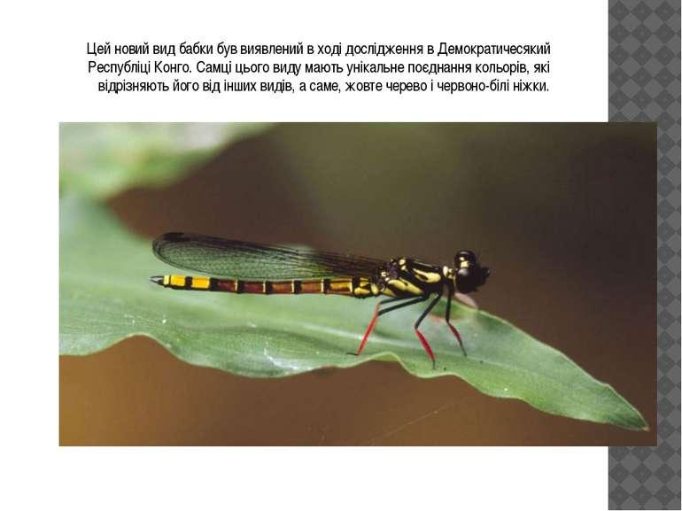 Цей новий вид бабки був виявлений в ході дослідження в Демократичесякий Респу...