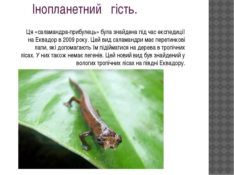 Ця «саламандра-прибулець» була знайдена під час експедиції на Еквадор в 2009 ...