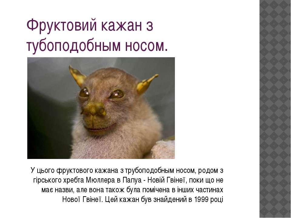 Фруктовий кажан з тубоподобным носом. У цього фруктового кажана з трубоподобн...