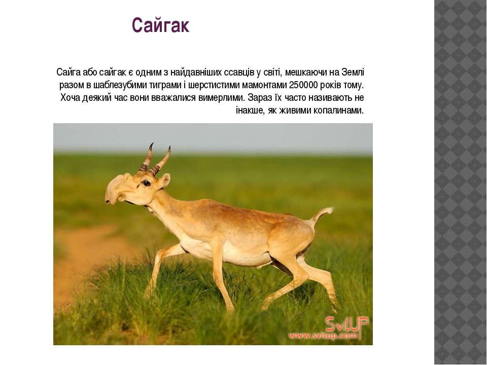 Сайгак Сайга або сайгак є одним з найдавніших ссавців у світі, мешкаючи на Зе...