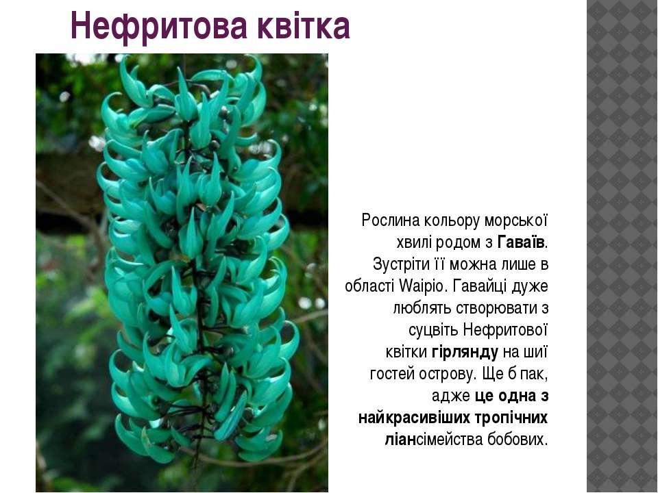 Нефритова квітка Рослина кольору морської хвилі родом зГаваїв. Зустріти її м...