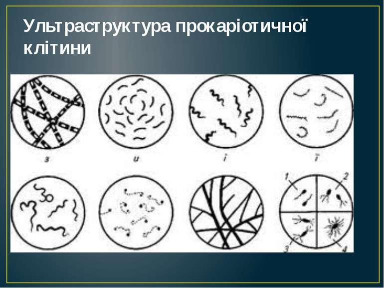Ультраструктура прокаріотичної клітини