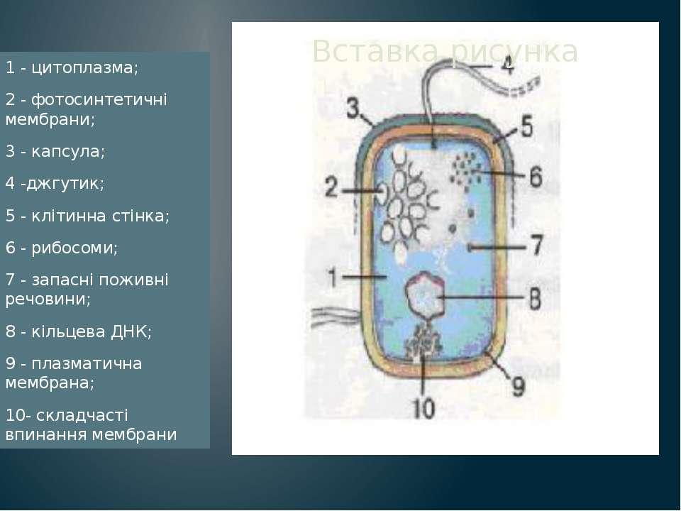 1 - цитоплазма; 2 - фотосинтетичні мембрани; 3 - капсула; 4 -джгутик; 5 - клі...