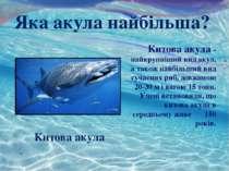 Китова акула - найкрупніший вид акул, а також найбільший вид сучасних риб, до...