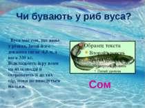 Чи бувають у риб вуса? Вуса має сом, що живе у річках. Іноді його довжина сяг...