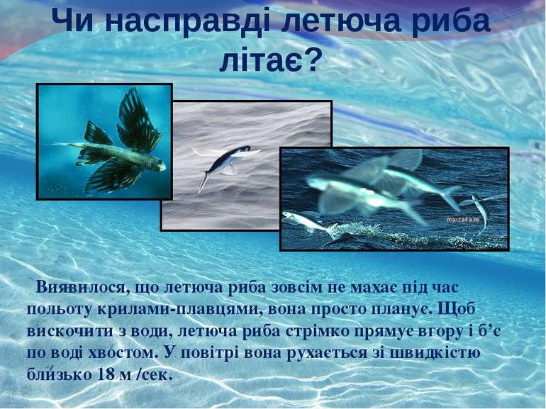 Чи насправді летюча риба літає? Виявилося, що летюча риба зовсім не махає під...