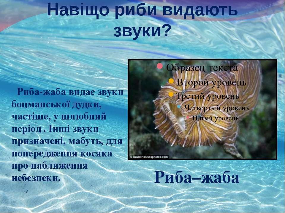 Навіщо риби видають звуки? Риба-жаба видає звуки боцманської дудки, частіше, ...