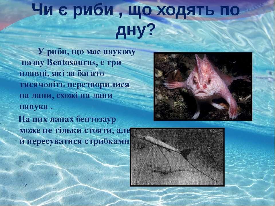 Чи є риби , що ходять по дну? , У риби, що має наукову назву Bentosaurus, є т...