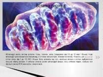 Мітохондрії мають вигляд кулястих тілець, паличок, ниток (завдовжки від 0,5 д...