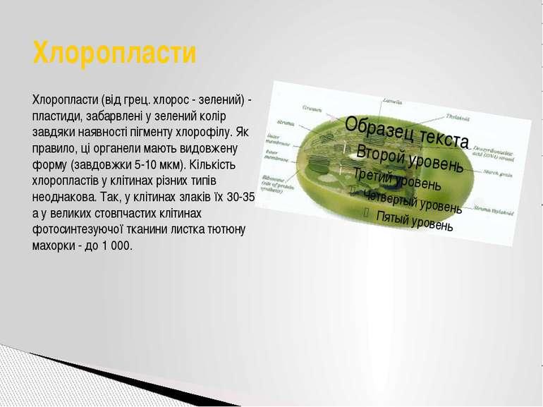 Хлоропласти (від грец. хлорос - зелений) - пластиди, забарвлені у зелений кол...