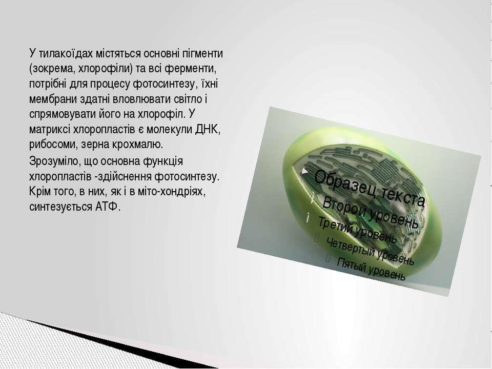 У тилакоїдах містяться основні пігменти (зокрема, хлорофіли) та всі ферменти,...