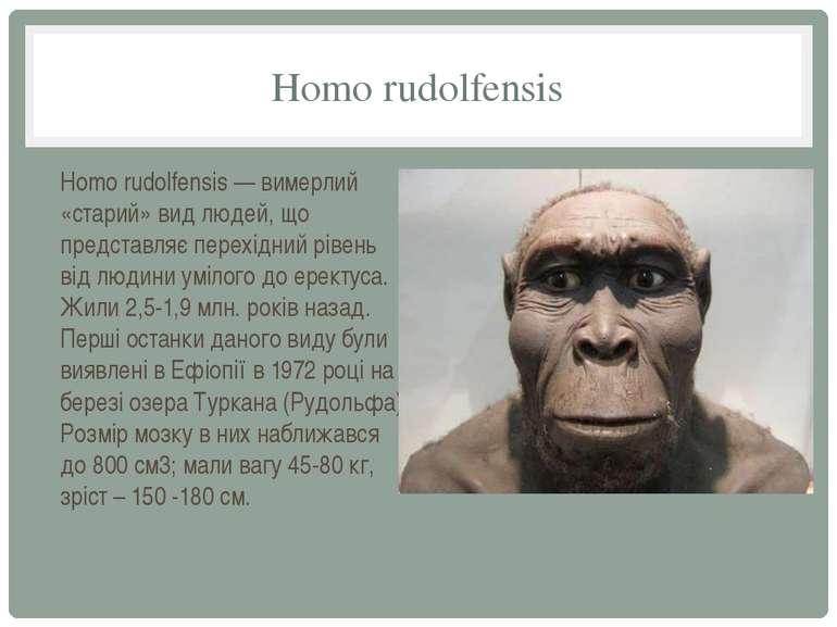 Homo rudolfensis Homo rudolfensis — вимерлий «старий» вид людей, що представл...