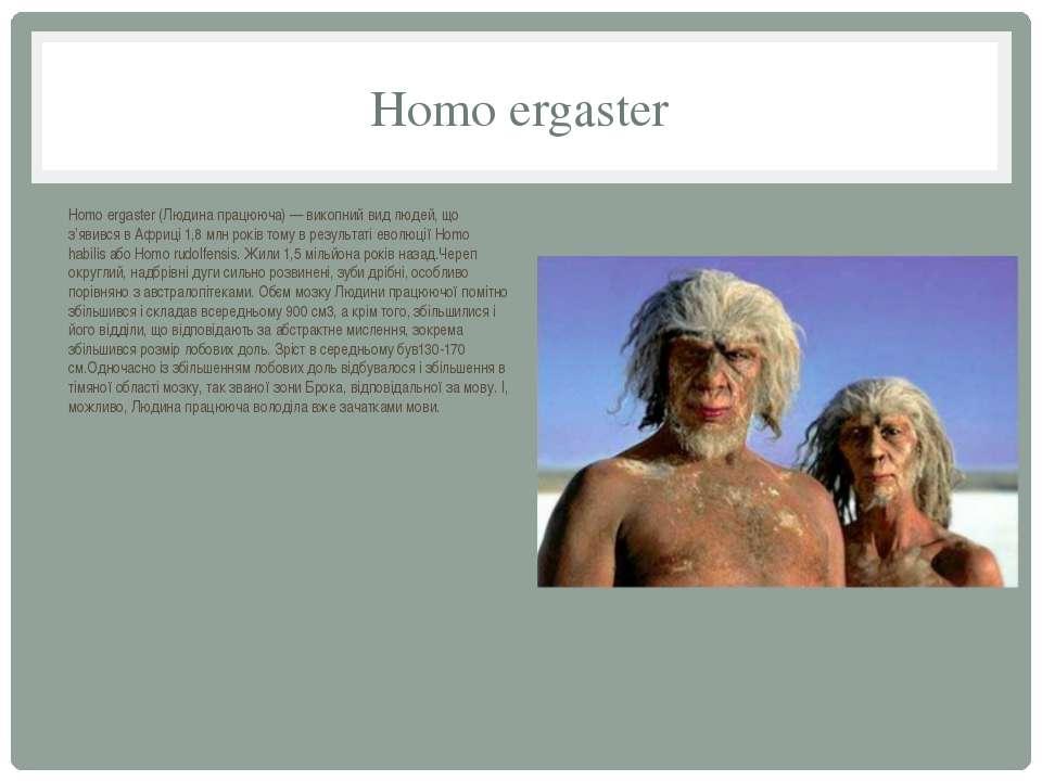 Homo ergaster Homo ergaster (Людина працююча) — викопний вид людей, що з'явив...