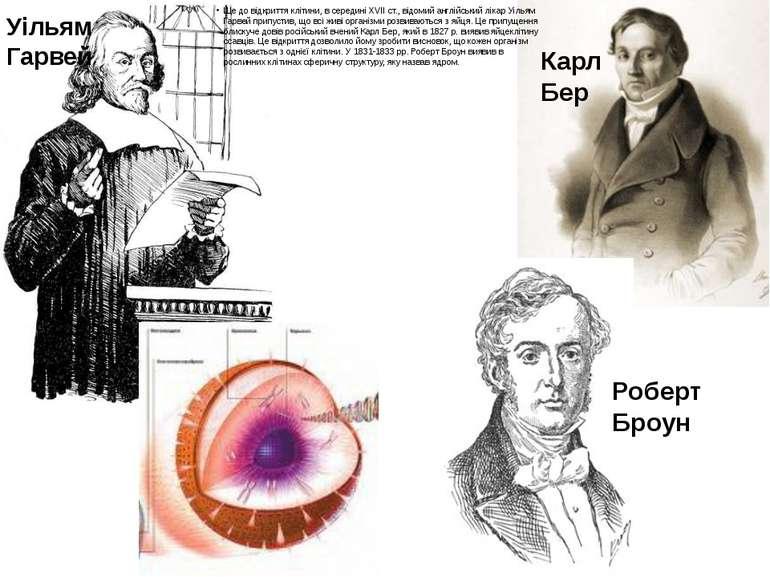 Ще до відкриття клітини, в середині XVII ст., відомий англійський лікар Уілья...