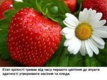 Етап зрілості триває від часу першого цвітіння до втрати здатності утворювати...