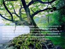 Підсумки Рослинам, як і іншим організмам, властиві процеси росту та розвитку....